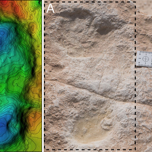 Newly Found 120,000-Year-Old Human Footprints in Saudi Arabia Set to Change Ancient Human Migration Theory