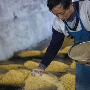 China to see bumper grain harvest on good growing conditions