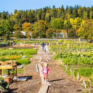 A farm in a residential area? Scandinavian style: Living with nature: A sense of security brought about by community-supported agriculture in the corona vortex (Maki Tatsumi) --Yahoo! News