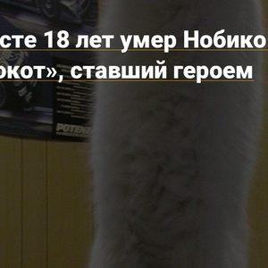 "Nobiko died at the age of 18 - ""long cat"" who became the hero of memes - News on TJ"