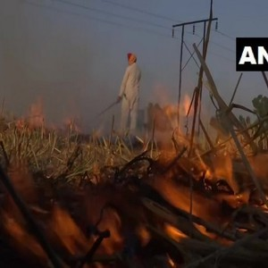 Stop stubble burning in Punjab, Haryana, UP in view of COVID-19 situation: Plea in Delhi HC