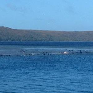 70 whales stranded on Tasmania's West Coast